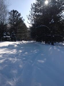 Snow 2014 photo 3