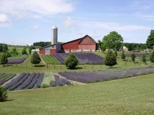 Lavender Hill Farms (Ladies Luncheon)