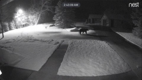 Bear Image Captured on Trail Cam – West Side of Six Mile Lake