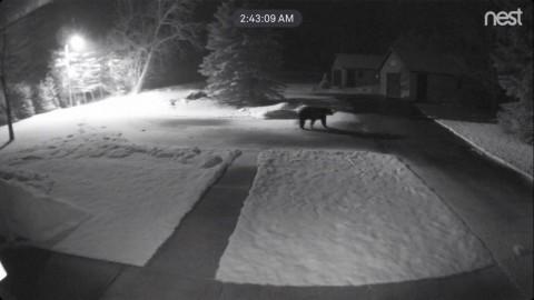 Bear Image Captured on Trail Cam – West Side of Six Mile Lake