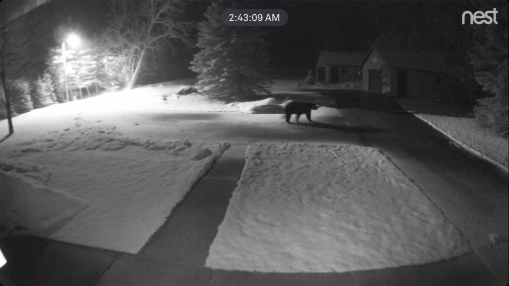 Bear Image Captured on Trail Cam - West Side of Six Mile Lake